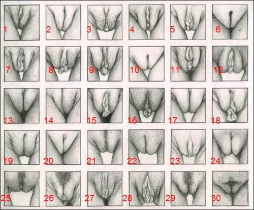 Классификация женских половых органов — Интим