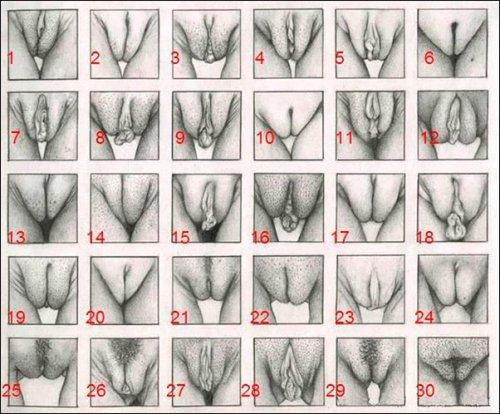 Фото женской вагин классификация 0 фотография